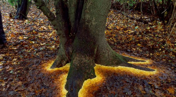 Inspired by the work of Andy Goldsworthy